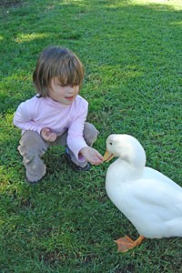 Animal-Care-Of-Montessori-School-Duck